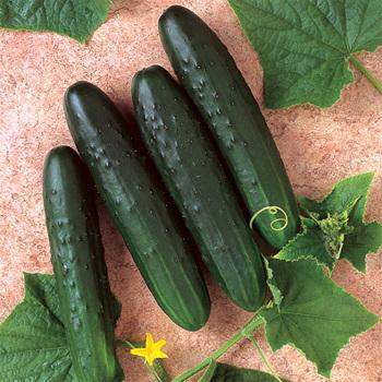 General Lee Hybrid Cucumber