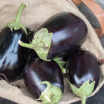 Goya Hybrid Eggplant