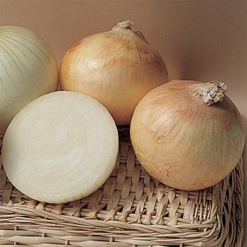 Candy Hybrid Onion