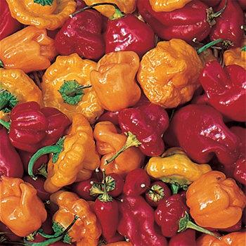 Caribbean Blend Pepper