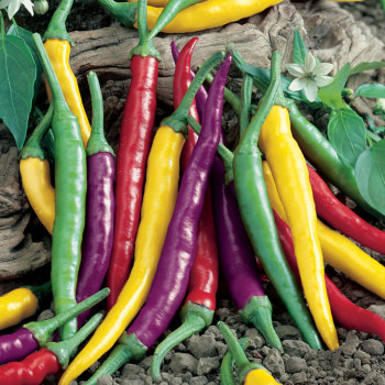 Cayenne Blend Pepper