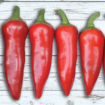 Flaming Flare Hybrid Pepper