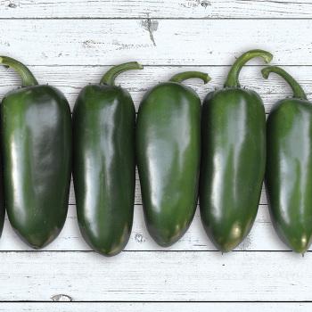 Emerald Fire Hybrid Jalapeno Pepper