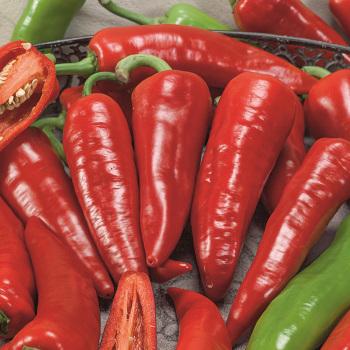 Giant Ristra Hybrid Pepper
