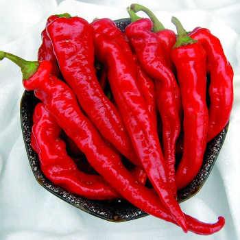 Hot Portugal Cayenne Pepper