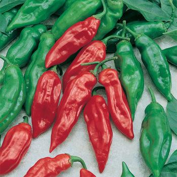Habanero Mayan Pepper