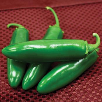 Spicy Slice Hybrid Jalapeno Pepper