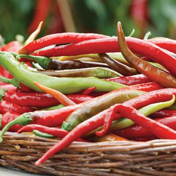 Thai Dragon Hybrid Pepper