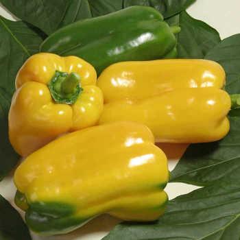 Gemini Hybrid Pepper
