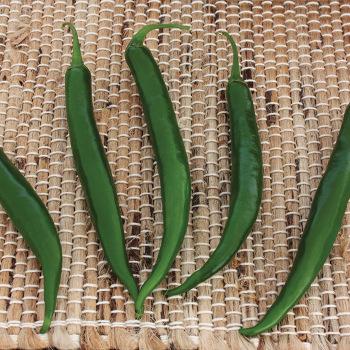 Crackle Hybrid Pepper