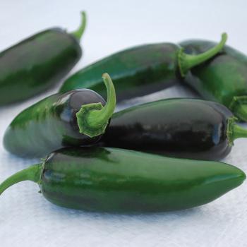 Craig's Grande Jalapeno Pepper