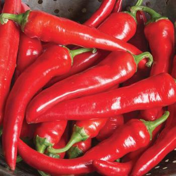 Red Ember Hybrid Cayenne Pepper