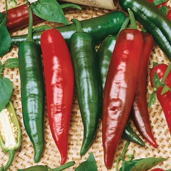 Sandia Hybrid Pepper
