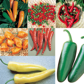 World's Hot Stuff Pepper Seed Collection - 1 Each Of 7 Varieties