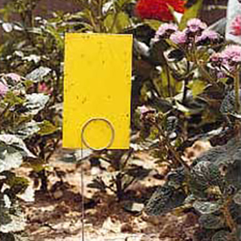 25 Stiky Strip Insect Trap Offer