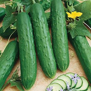 Slicing Cucumber Seeds
