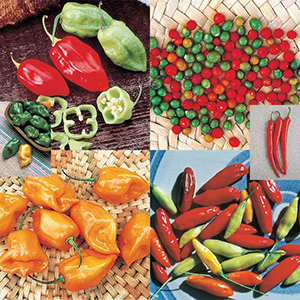 Pepper Seed Collections