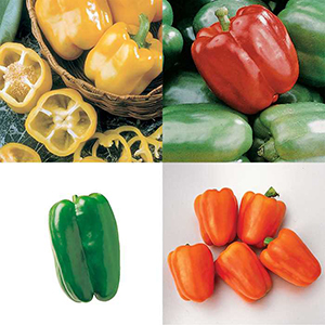 Pepper Plant Collections