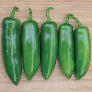 Sweet Non-Bell Pepper Plants