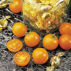 Cherry/Grape Tomato Plants