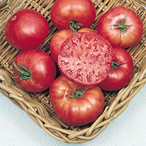 Heirloom Tomato Plants
