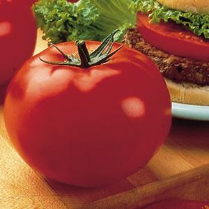 Large Slicing Tomato Plants