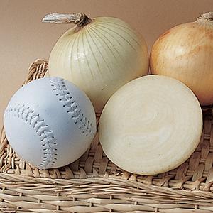 Onion Plants